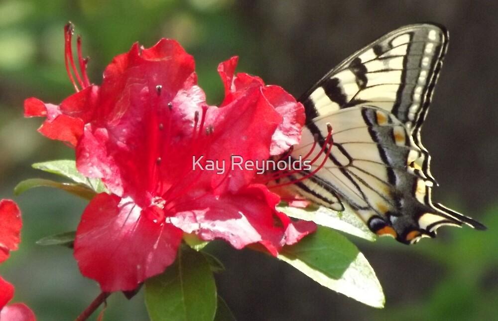 Butterfly by Kay Reynolds