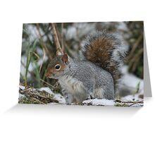 Squirreling Around Greeting Card