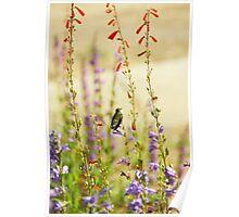 Hummingbird and Penstemon Poster