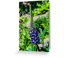 Blue Lupins Greeting Card