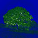 PRECIOUS TREE by Aritheeagle