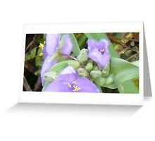 blossoming Greeting Card