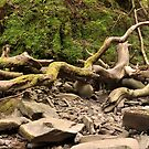Melincourt Falls, Wales, UK - Fallen Tree by Bearfoote