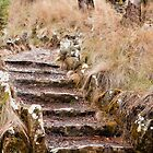 wild stairs by aurelie k