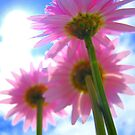 Flower Power by Honor Kyne