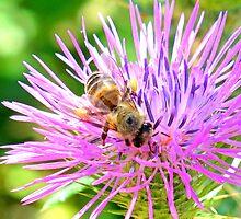 Honey Bee - Bokeh by Honor Kyne