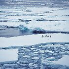 Penguins on Ice Pack by Peter Hammer