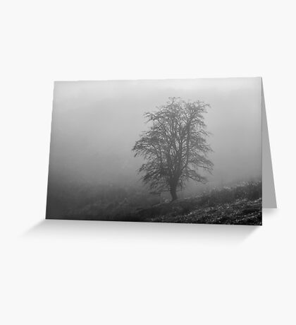 Mountain Ash in the Mist Greeting Card