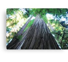 Big Red Woods Canvas Print