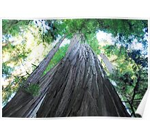 Big Red Woods Poster
