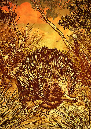 Echidna by James Fosdike