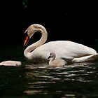 Mute Swan And Cygnet by Michael Cummings