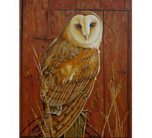 Barn Owl Photographic Print