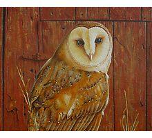 Barn Owl (close up) Photographic Print