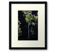 Tree In The Forest Framed Print