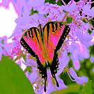 Pink Butterfly POP by Jeff Johannsen