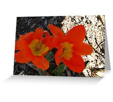 Snazzy Tulips Greeting Card