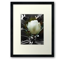 Natural Southern Charm Framed Print