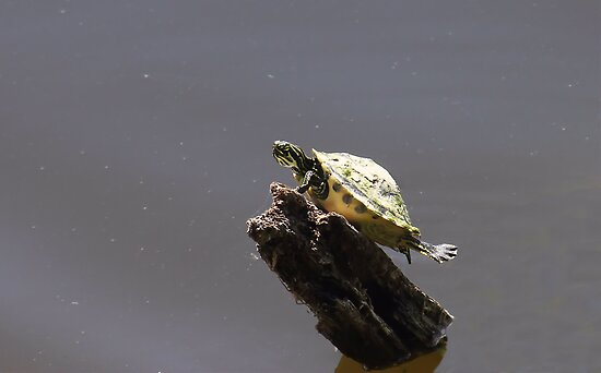 Little Turtle with an Attitude by Rosalie Scanlon