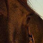 Blackcat's eye  by Phoebe Kerin