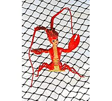 Lobster Girl  Photographic Print