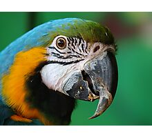 Is there Something on my Beak Photographic Print