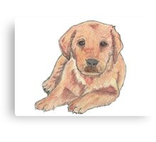 Colour pencil puppy Canvas Print