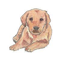Colour pencil puppy Photographic Print