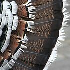 Turkey Feathers by v-something