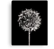 Monochrome Dandelion Canvas Print