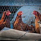"Three ""French"" Hens by Yvonne Roberts"