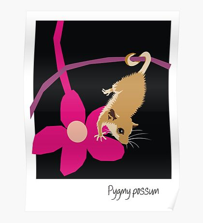 Pygmy possum Poster