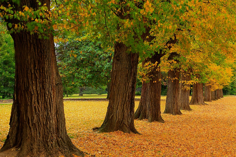 Autumn in the Gardens by Cameron B