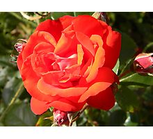 Beauty in bloom Photographic Print