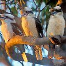 Kookaburras at Sunset by Tainia Finlay