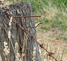Old Barbed Wire Fence by AmandaBentley16