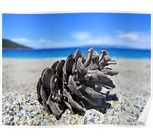 Pine Cone - Beach Surrounded by Pine Trees Poster