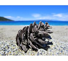 Pine Cone - Beach Surrounded by Pine Trees Photographic Print