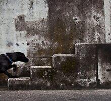 Urban animal by Cecily  Graham