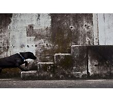 Urban animal Photographic Print