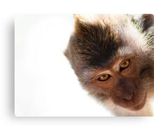 Balinese Monkey Canvas Print