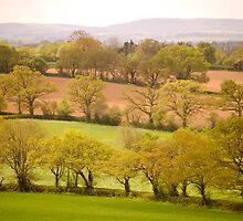 East Devon Rural ...43 by Mike  Waldron