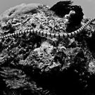 Sea snake in black and white by Stephen Colquitt