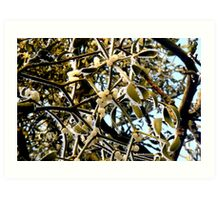Mistletoe in the Frost Art Print