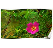 CHERRY  BUSH FLOWER Poster