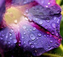 Rain from Heaven  by aprilann
