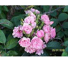 Original Bouquet Photographic Print