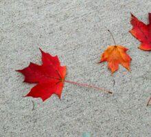 Autumn Leaves on Pavement Sticker