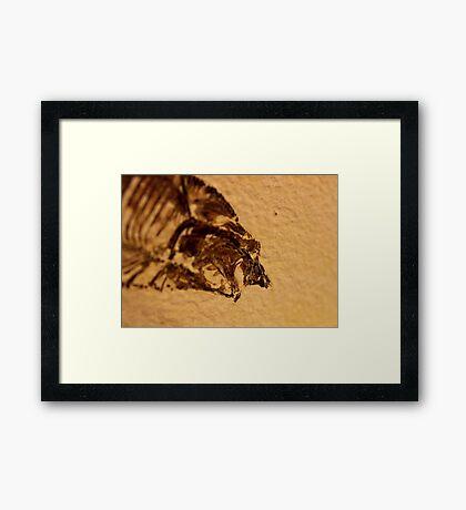 Jaws! Framed Print