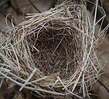 Nesting by AmbientPhotos